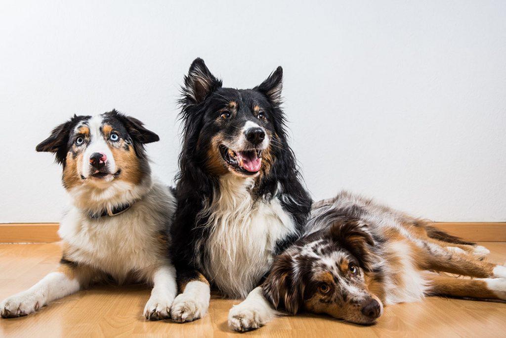Drei Hunde der Trainerinnen