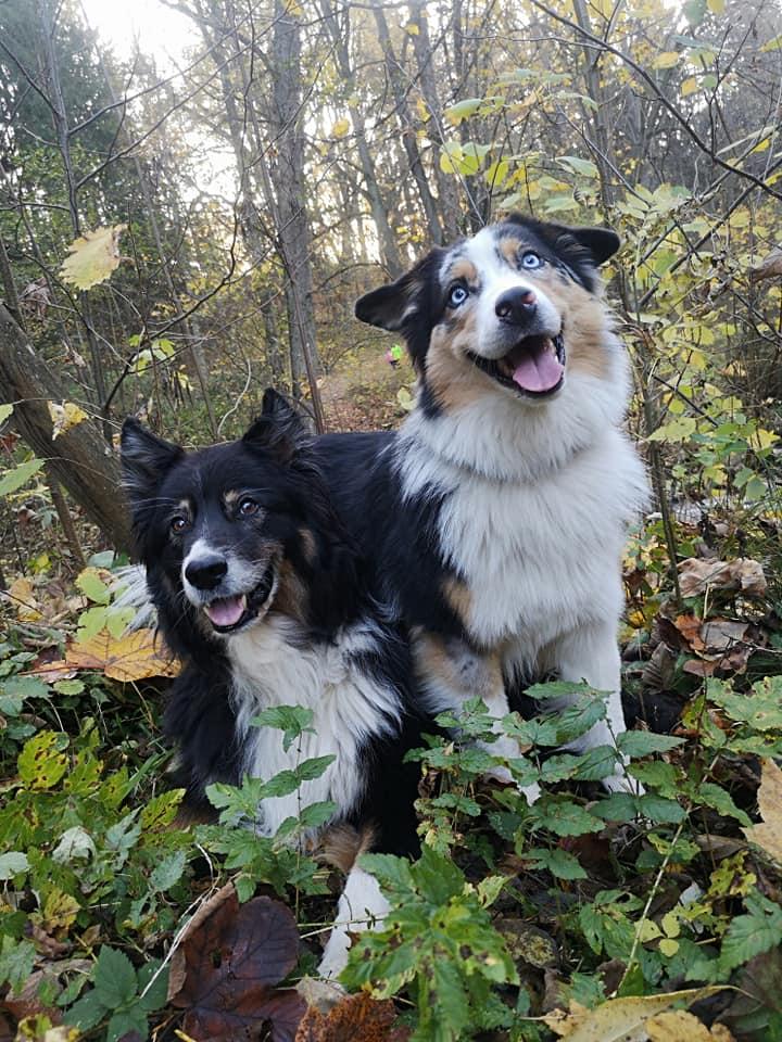 Frodo und Juna im Wald